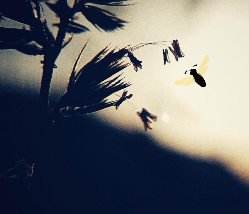 Fleur de graminée avec un dessin d'insecte ajouté